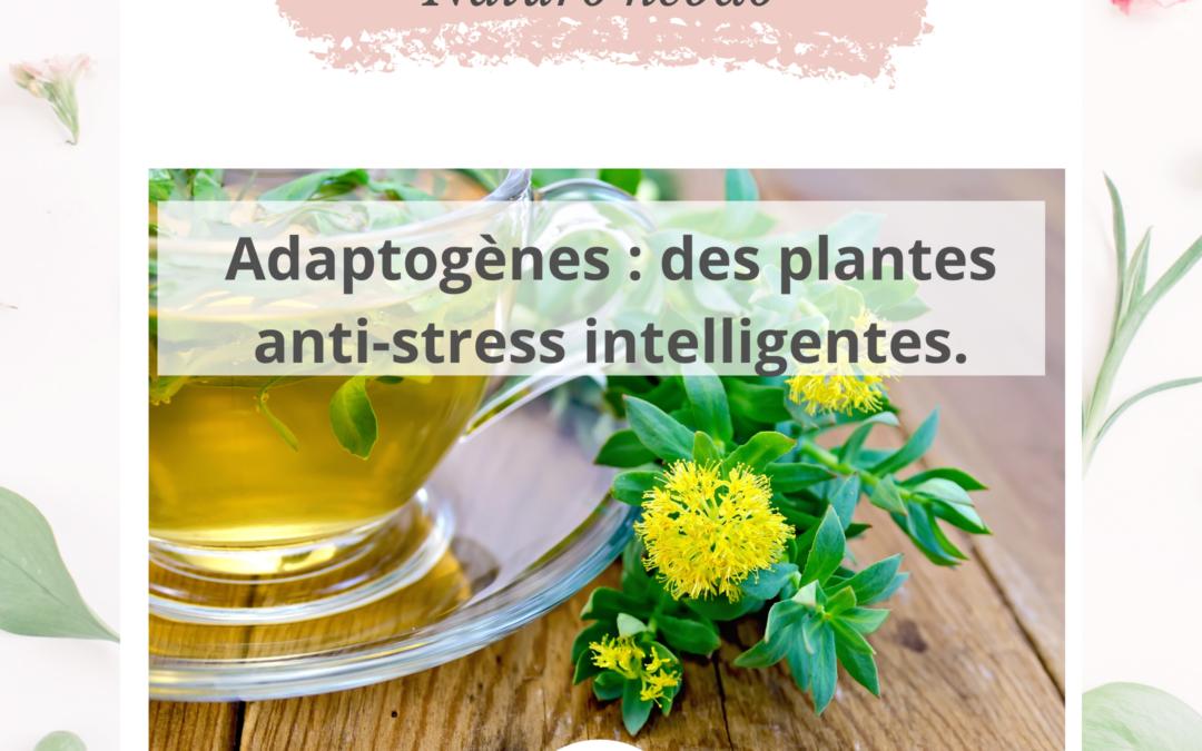 Adaptogènes : des plantes anti-stress intelligentes